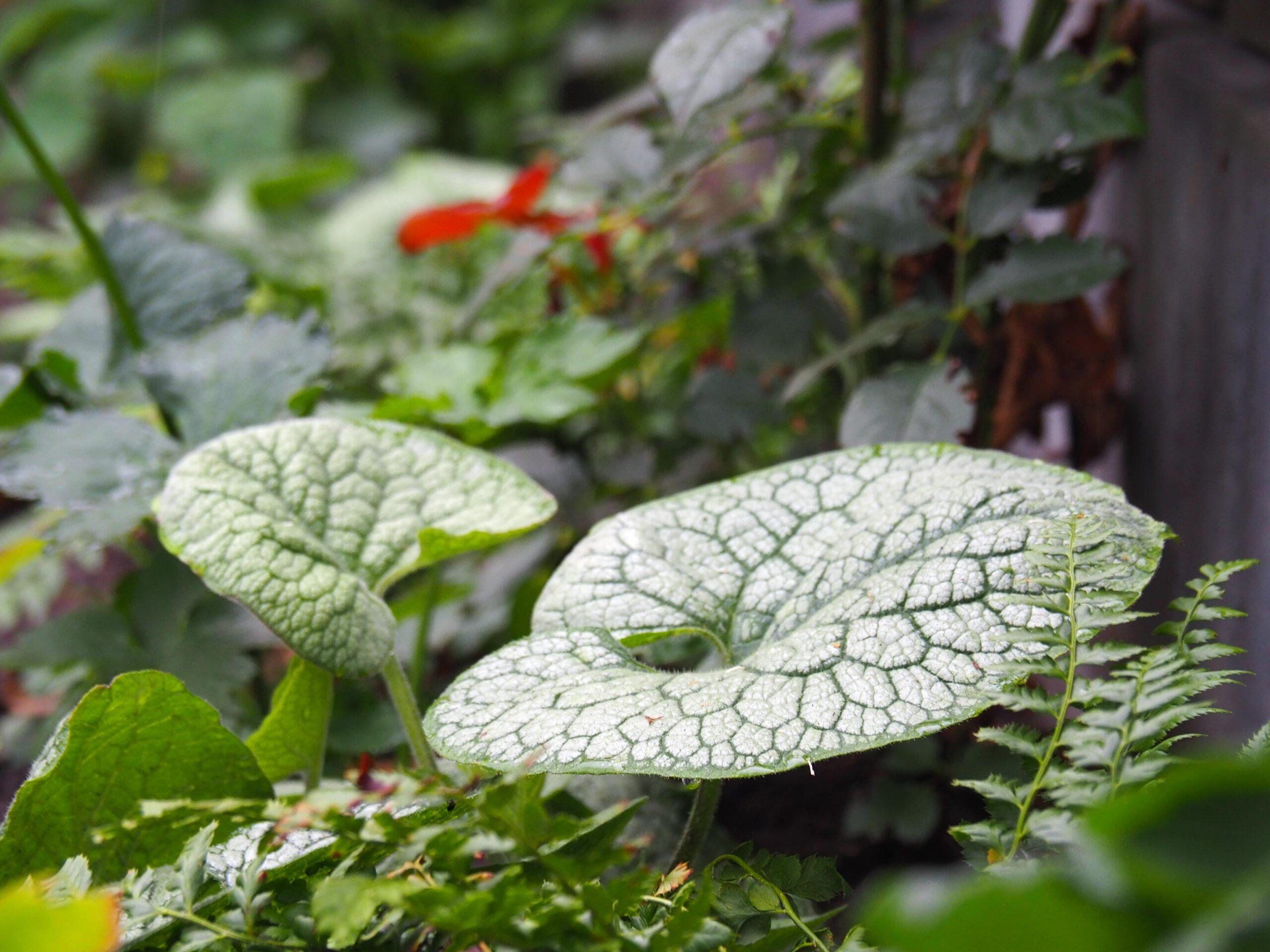 Bladplanten