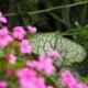 Vaste planten border (6)